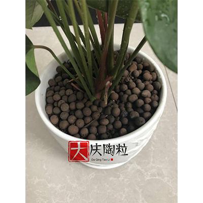 花卉陶粒5-10mm